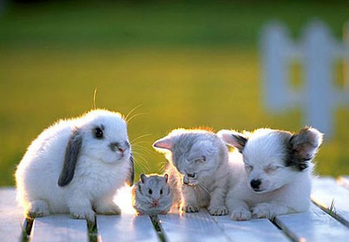 Cute white rabbit, mouse, cat and dog; the rabbit and dog have black ears, they are all posing n front of a green nature background.