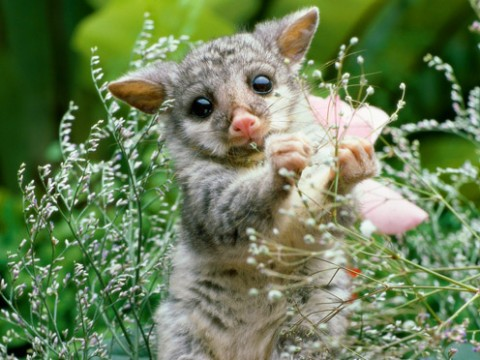 FunCage-cute-baby-animal-3