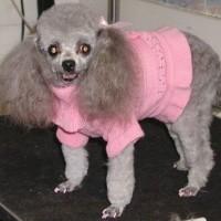 Poofy Dog Haircut