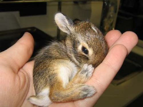 10 Of The World S Smallest Animals Funcage