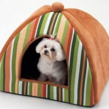 The Dog Tent