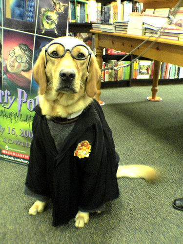 With the epic final film finally released this year show how much you love Harry Potter by dressing your dog in those iconic glasses and robe. & 10 Incredibly Nerdy Dog Costumes - FunCage