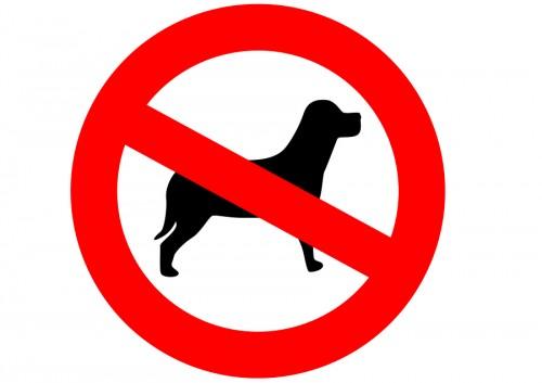 ممنوع إصطحاب الكلاب