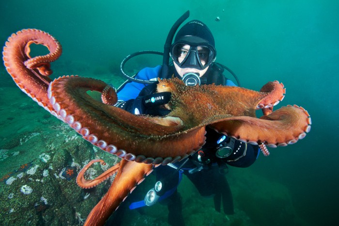30-amazing-underwater-photos-by-Alexander-Semenov-001