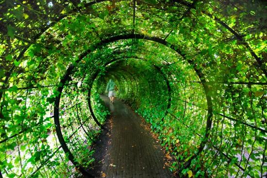 Garden of poisonous plants in alnwick 10 photos