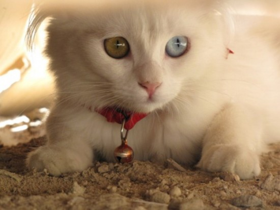 20 Most Beautiful Animals With Different Colored Eyes - FunCage