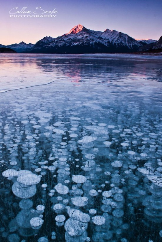 Incredible-ice-bubbles-in-Lake-Abraham-003