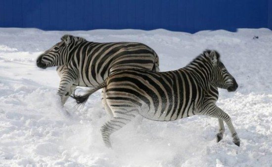 animals without necks 20 photos funcage