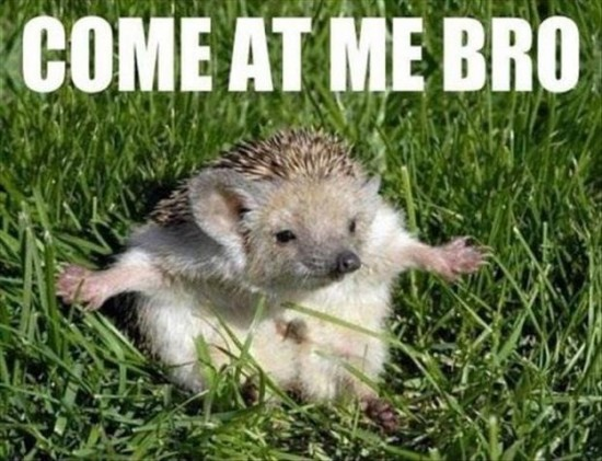 Attack-Of-The-Funny-Animals-003