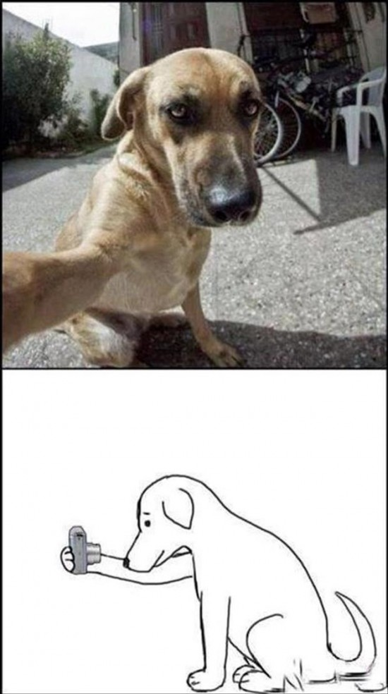 Attack-Of-The-Funny-Animals-006