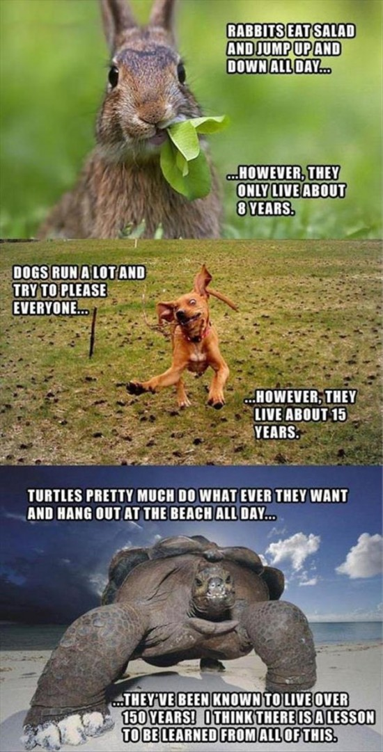 Attack-Of-The-Funny-Animals-010