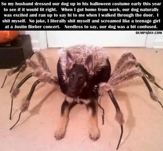 Attack-Of-The-Funny-Animals-012