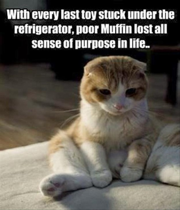funny pictures of cats without captions