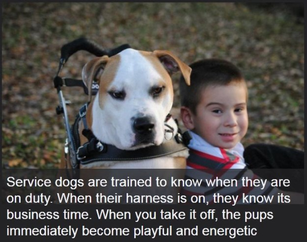 Interesting Facts About Dogs (19 Photos) - FunCage