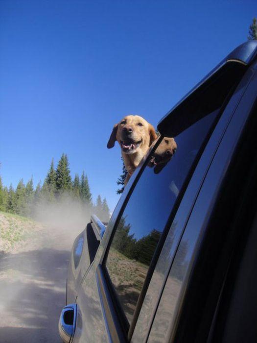 Awesome-Dog-Photos-015