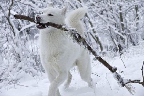 Awesome-Dog-Photos-019