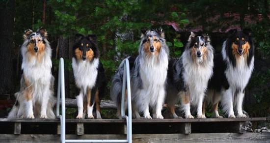Awesome-Dog-Photos-020