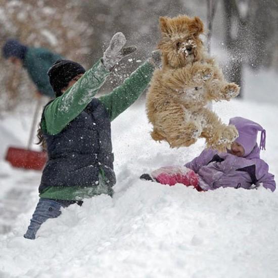 Awesome-Dog-Photos-026