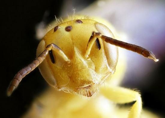Close-up-Shots-Show-A-Good-Look-at-Honey-Bees-001