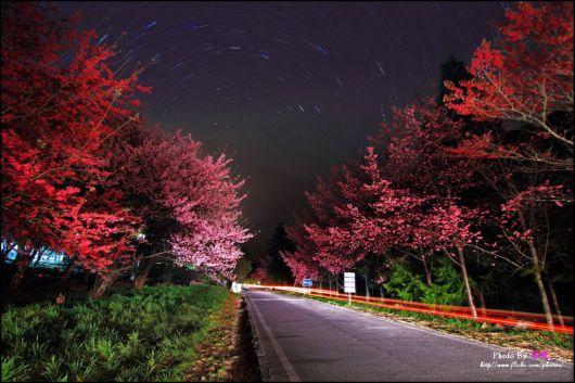 The-Sakura-Blossoms-Photography-001