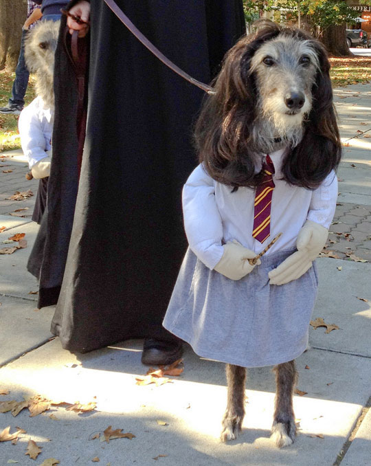 20-Funniest-Dog-Halloween-Costumes-001 & 20 Funniest Dog Halloween Costumes - FunCage