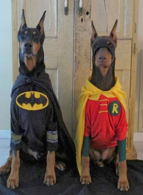 20 Funniest Dog Halloween Costumes