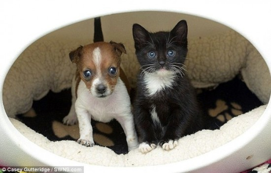 cute puppy and kitten are best friends funcage