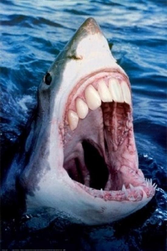 Sharky with new teeth
