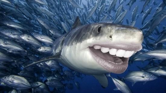 Sharks with human teeth - photo#19