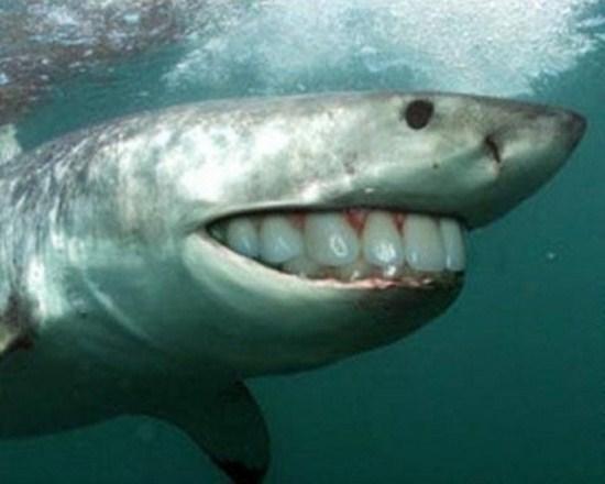 Sharks with human teeth - photo#4