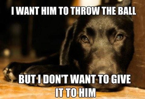 dog owners will understand 18 pics funcage