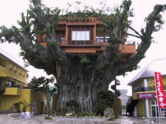 Treehouse Restaurant in Okinawa, Japan