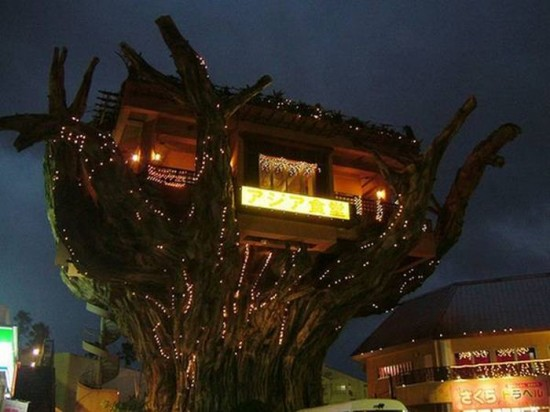 Treehouse Restaurant in Okinawa, Japan1