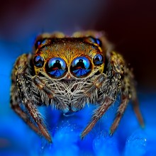 Macrophotographs of Spiders Staring Right Into Your Soul 001