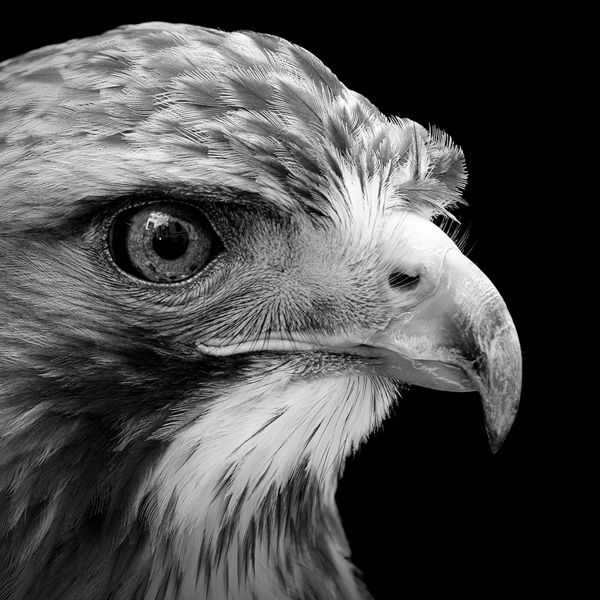 12 Animal Portraits In Black And White