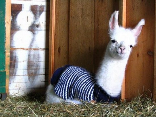 21 Animals Wearing Sweaters - FunCage