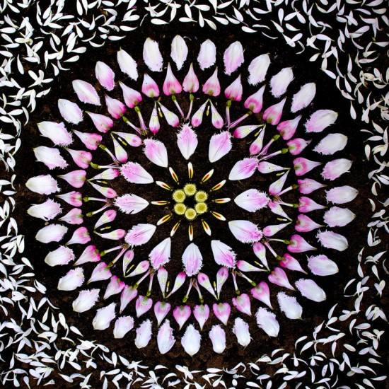 Flower Mandalas by Kathy Klein 003