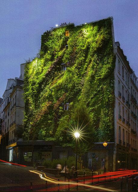 Vertical Garden – By Patrick Blanc in Madrid, Spain 012