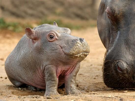 Animals With Really Short Necks 001
