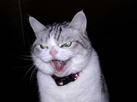 Pictures of Evil Cats Being Jerks 001