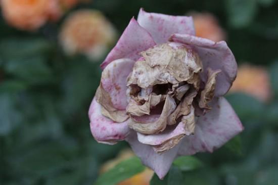 6 Flowers That Look Like Something Else Funcage