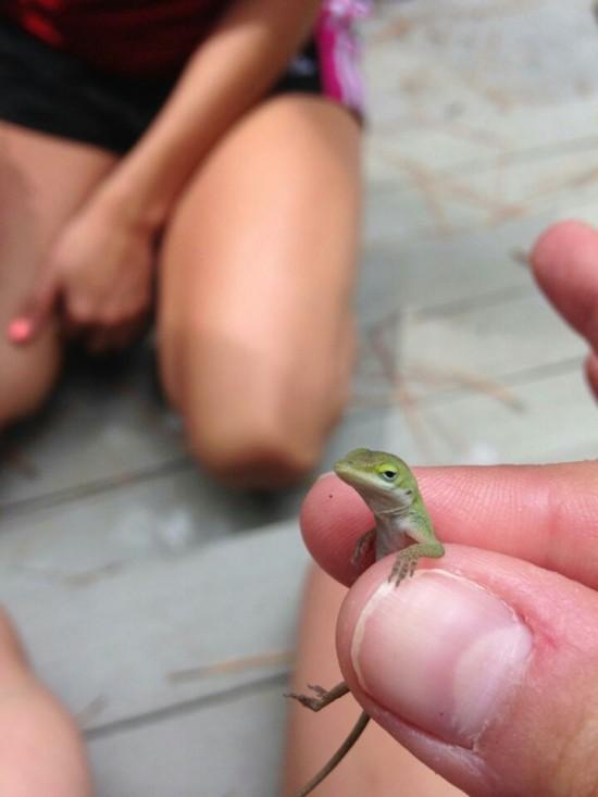 original unimpressed lizard