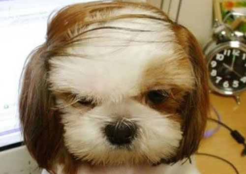 9 Hilarious Dog Haircuts Funcage