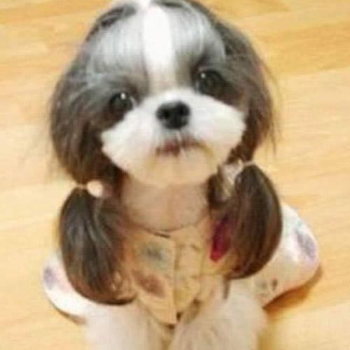 9 Hilarious Dog Haircuts