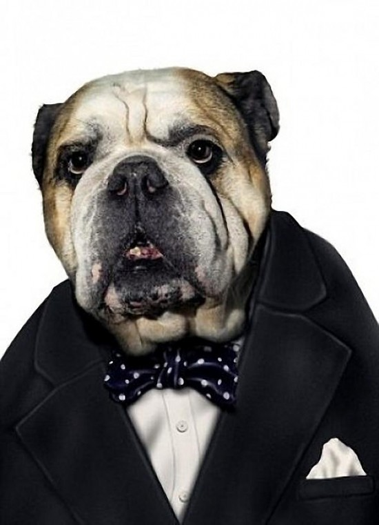 Pets as Famous People 32 Photos FunCage