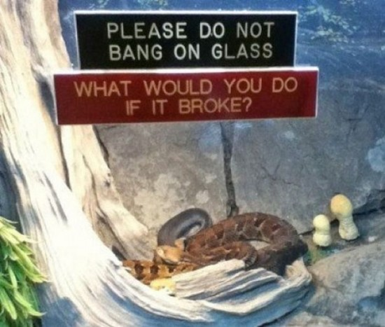 Funny-Animal-Signs-010