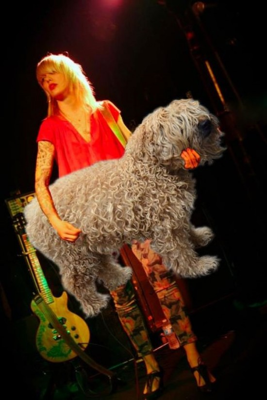 Bass-Guitars-Replaced-by-Dogs-009