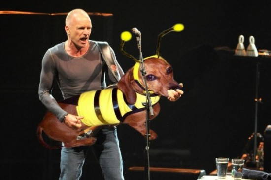 Bass-Guitars-Replaced-by-Dogs-010