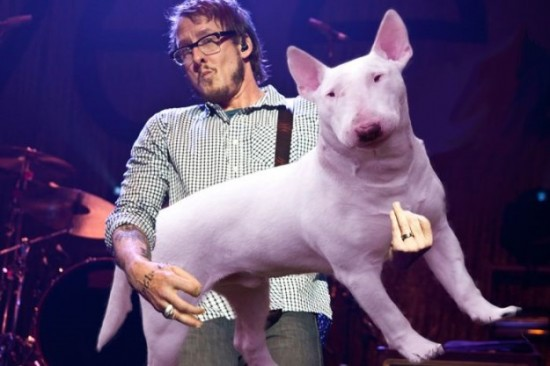Bass-Guitars-Replaced-by-Dogs-016