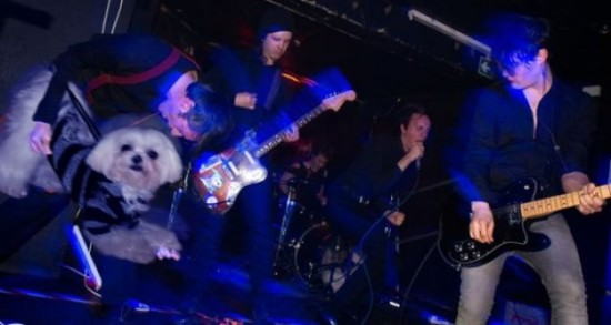Bass-Guitars-Replaced-by-Dogs-021